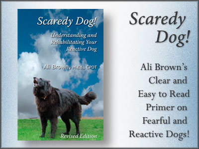 Scaredy Dog  Understanding and Rehabilitating Your Reactive Dog