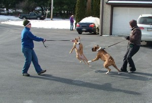 Here's an example of two dogs going over threshold when they got too close to each other.