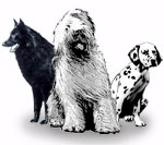 Great Companions LLC company logo