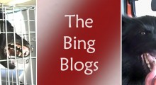 The Bing Blogs. Ali Brown's book about successes with her difficult dog.